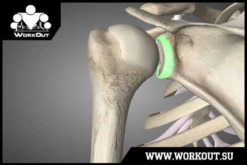 дисторзия плечевого сустава