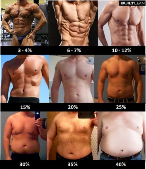 Day 39. Body fat percentage