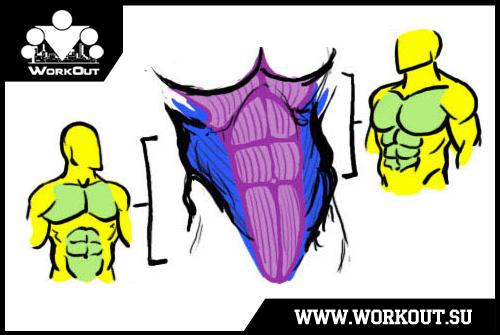 Пресс ликбез или кое-что о мышцах живота