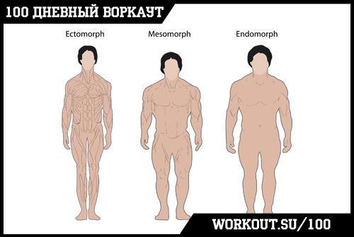 День 37. Пара слов о трех типах телосложений человека (эктоморф, эндоморф и мезоморф)