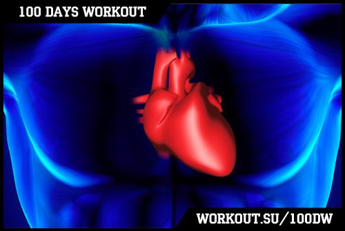 Day 67. Cardiovascular system